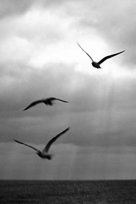 Photograph - Florida Gulls by Jon Emery
