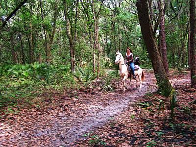 Florida Horse And Rider Art Print
