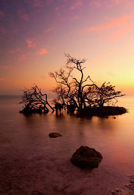 Florida Keys Sunset Art Print by Mike  Dawson
