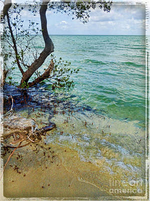 Photograph - Florida Keys Tropical Island by Joan  Minchak