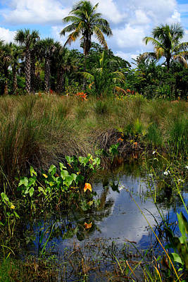 Photograph - Florida Lagoon by Joseph G Holland