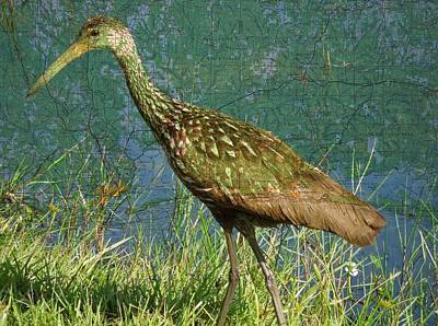 Digital Art - Florida Limpkin by Ron Davidson