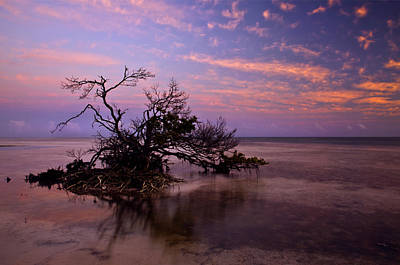 Florida Keys Photograph - Florida Mangrove Sunset by Mike  Dawson