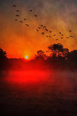 Photograph - Florida Morning by Emily Stauring
