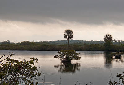 Photograph - Merritt Island Wildlife Refuge by John Black
