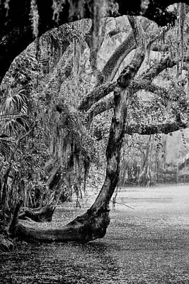 Photograph - Florida Naturally 3 - Bw by Christopher Holmes