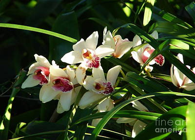 Florida Orchids Art Print by Lew Davis