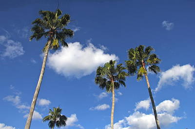 Photograph - Florida Palm Trees by Denise Mazzocco