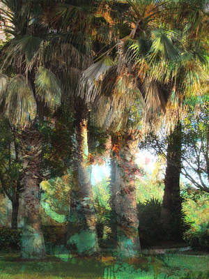 Photograph - Florida Palms by Carol Kinkead