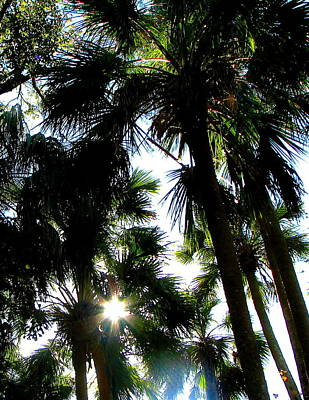 Photograph - Florida Palms by Jp Grace