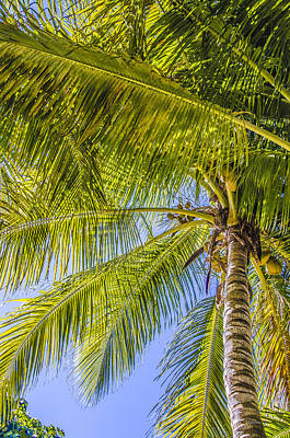 Photograph - Florida Palms by Julie Palencia