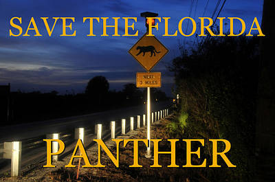 Photograph - Florida Panther Crossing by David Lee Thompson