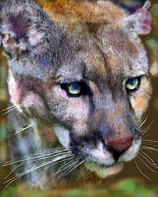 Florida Panther Original by Frederick Kenney