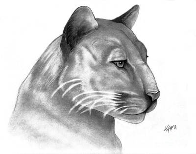 Drawing - Florida Panther by Kami Catherman
