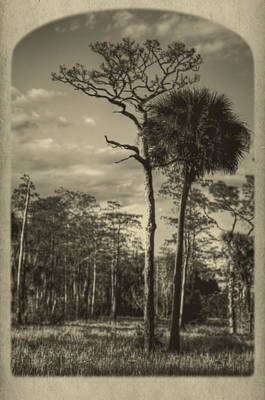 Florida Postcard Art Print by Debra and Dave Vanderlaan