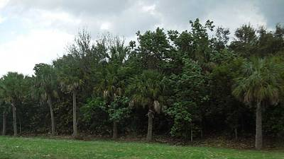 Photograph - Florida Scenery by Ron Davidson