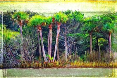 Photograph - Florida Scrubs by Alice Gipson