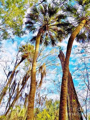 Photograph - Florida Skies And Palms by Judy Via-Wolff