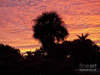 Owls - Florida Sunset by Allan  Hughes