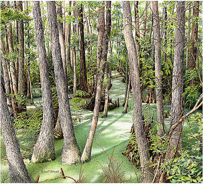 Painting - Florida Swamp by Robert Hinves