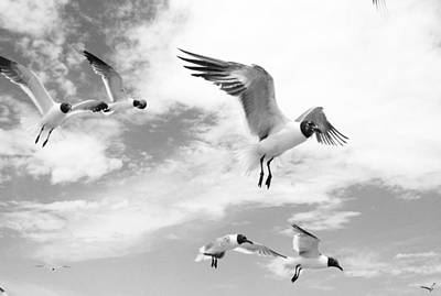 Photograph - Florida Terns In Black And White by Shere Crossman
