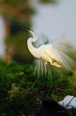 Indigo Buntings Wall Art - Photograph - Florida, Venice, Audubon Sanctuary by Bernard Friel