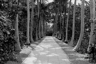 Florida Walkway Black And White Art Print by Carey Chen