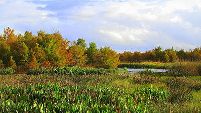 Florida Wetlands August Art Print