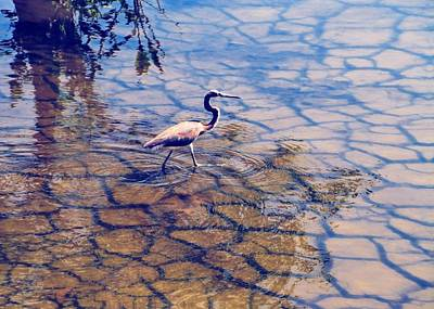Florida Wetlands Wading Heron Art Print