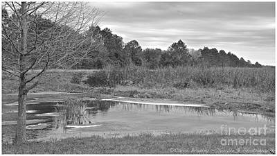 Photograph - Florida Wetlands Winter by Carol  Bradley