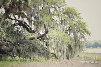 Photograph - Florida Woodland Tree by Andrea Hazel Ihlefeld