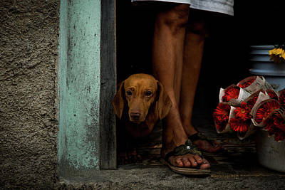 Cute Puppy Photograph - Florist's Dog by Inge Schuster