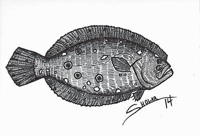 Salt Flats Drawing - Flounder by Alex Sholar