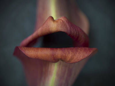 Photograph - Flower #295 by Hans Janssen