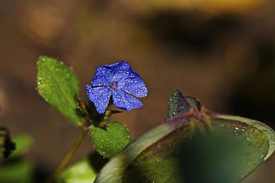 Flower Photograph - Flower 2 by SC Heffner