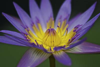 Photograph - Flower 3 by SC Heffner