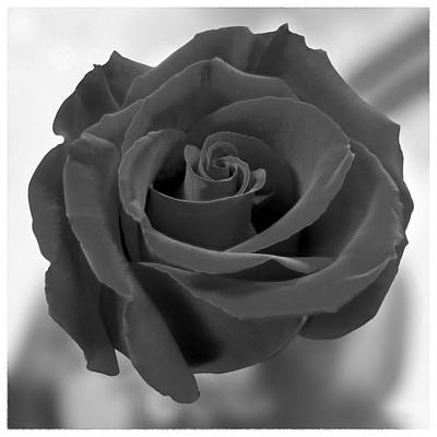 Roses Royalty-Free and Rights-Managed Images - Dark Rose by Mike McGlothlen