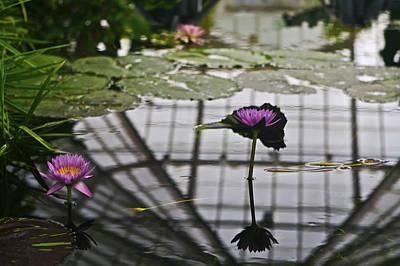 Flowers Photograph - Flower 4 by SC Heffner