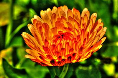Photograph - Flower 55 by Ed Roberts