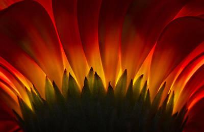 Wall Art - Photograph - Flower Ablaze by Jack Daulton