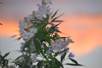 Photograph - Flower Against Sky by Deprise Brescia