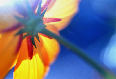 Photograph - Flower Against The Sun by Arkady Kunysz