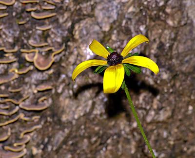Photograph - Flower And Bark by Susan Leggett