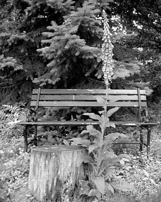 Photograph - Flower And Bench by Patricia Januszkiewicz