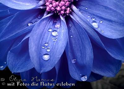 Flower And Drops Art Print by Olivia Narius