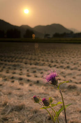 Flower And Field Art Print by Aaron Bedell