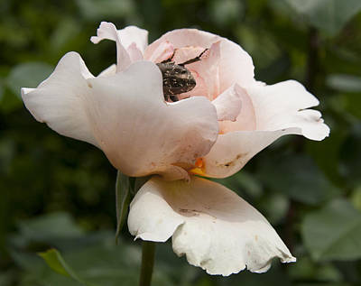 Photograph - Flower And Insect by Masami Iida