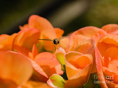 Photograph - Flower And Ready To Fly by Ismo Raisanen