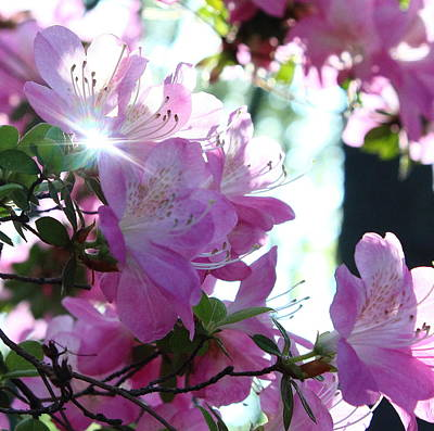 Thomas Kinkade Royalty Free Images - Flower And Sunlight Royalty-Free Image by Stephen Hobbs