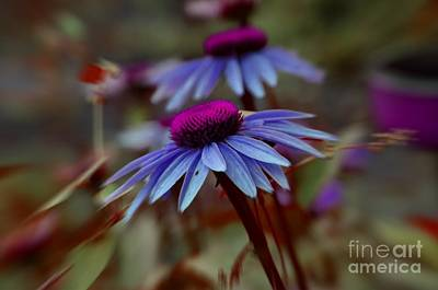 Photograph - Flower Art by Tamera James